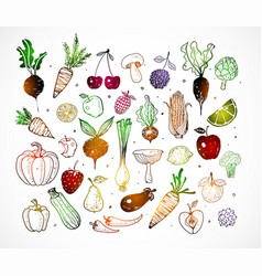 Colored doodle fruits and vegetables isolated on vector