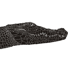 Crocodile head vector image
