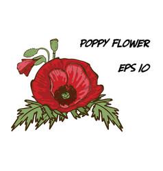 Hand-drawn of red poppy flower vector