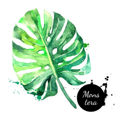 hand drawn sketch watercolor tropical leaf vector image