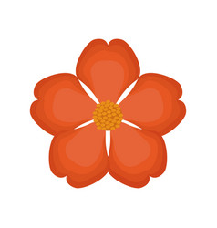 nasturtium flower spring image vector image