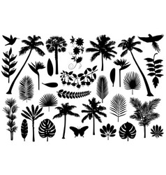 Tropical silhouette collection vector