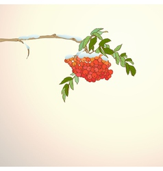 Background with rowan branch vector image