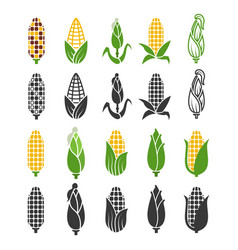 black and color corn harvest icons isolated on vector image