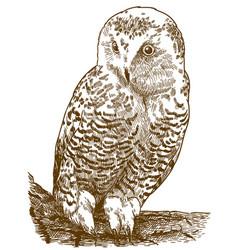 Engraving of snowy owl vector
