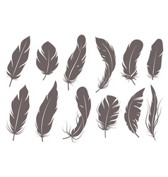 feather silhouettes different feathering birds vector image