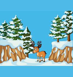 one deer in snow mountain vector image