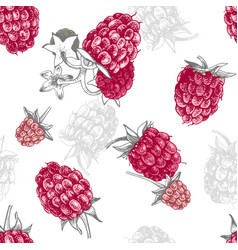 seamless pattern with hand drawn raspberries vector image