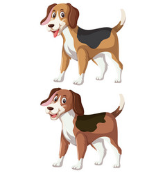 a set of happy beagle vector image