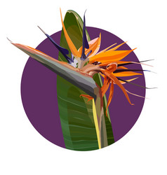Background with strelitzia reginae vector