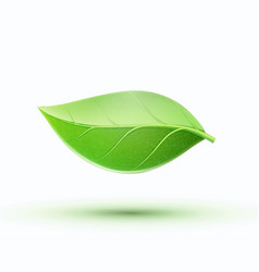 eco concept icon vector image
