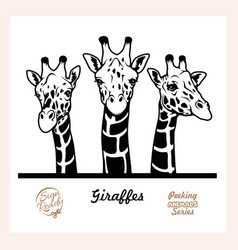 Peeking giraffes - funny giraffes peeking out vector