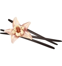 Realistic vanilla flower and pods vector image