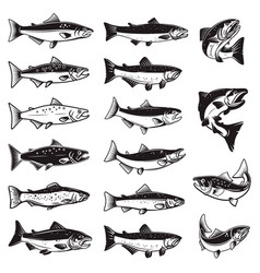 set salmon fish in engraving style design vector image
