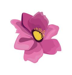 Pink anemone flower design vector