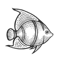 Angel fish sketch engraving vector