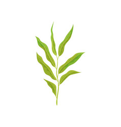 branch of tree with small willow leaves fresh vector image