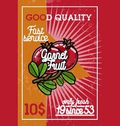 color vintage fruit banner vector image vector image