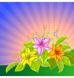 Flower background lily and sun vector