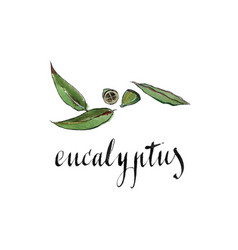 Watercolor eucalyptus leaves vector