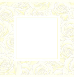white rose banner card vector image
