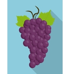 grapes purple fruit organic food icon vector image