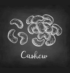 chalk sketch of cashew vector image vector image