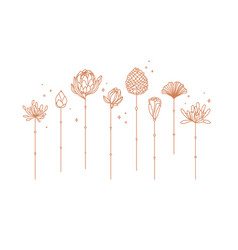 Art deco line flowers vector