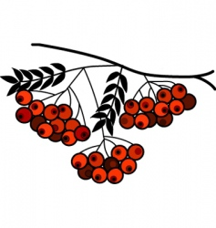 berries on branch vector image