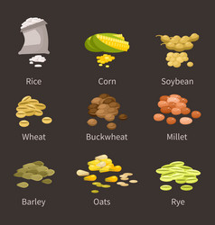Ereals and legumes of various agricultural types vector