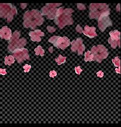 Flying semi transparent petals and cherry blossoms vector