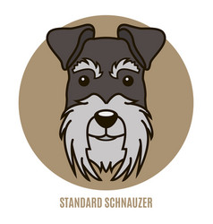 Portrait of standard schnauzer vector