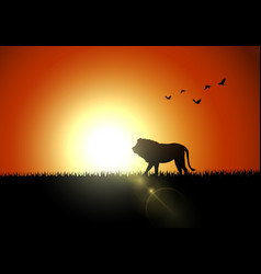 Silhouette lion in sunset at savanah vector