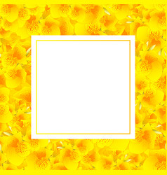 yellow canna lily banner card vector image