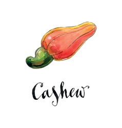 watercolor red cashew vector image vector image