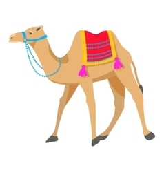 Camel cartoon on white vector