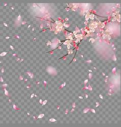 Spring cherry blossom vector