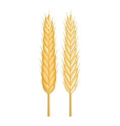 strong wheat icon realistic style vector image