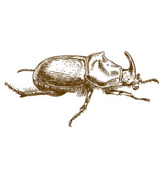 Engraving drawing rhinoceros beetle vector
