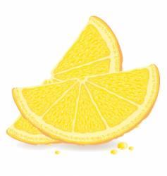 Orange slices vector