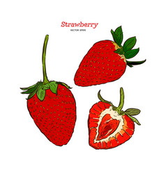 Set strawberry hand drawn vector