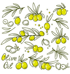 set of olive branch vector image vector image