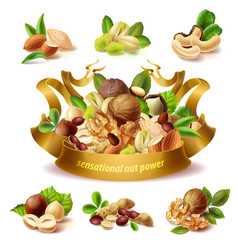 3d realistic set of different nuts vector