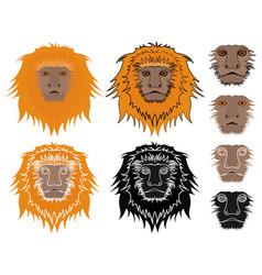 Golden lion tamarin face view vector