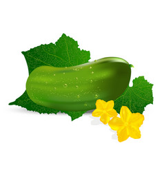 realistic cucumber with leaf and flower vector image