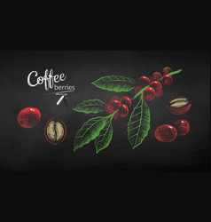 sketches set coffee branch and berries vector image