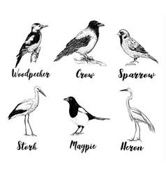 birds set sketch collection of birds vector image vector image