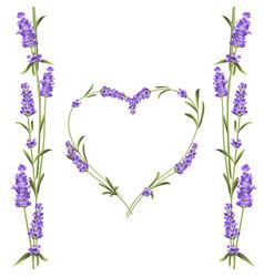 lavender elegant card with frame flowers vector image