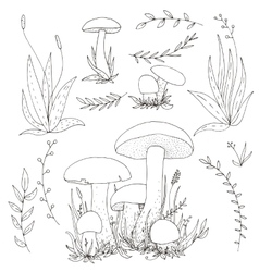 Mushrooms and plants vector