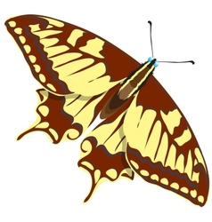 Seamless background of colorful butterflies vector image vector image